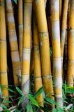 竹子离开结构树 免版税库存照片