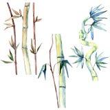 竹子绿色叶子  叶子植物植物园花卉叶子 被隔绝的例证元素 库存例证