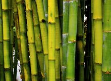 竹子绿色 库存照片