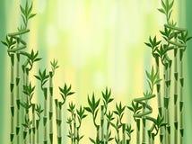 竹子绿色 免版税库存照片