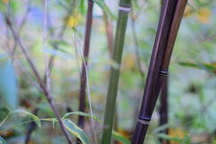 竹子转动的黑色 免版税库存照片