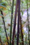 竹子转动的黑色 免版税图库摄影