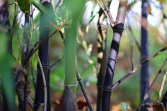 竹子转动的黑色 库存图片