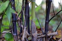 竹子转动的黑色 免版税库存图片