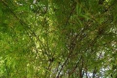 竹子软的焦点作为背景 免版税库存照片