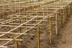 竹子镶板保税的结构 免版税库存照片