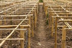 竹子镶板保税的结构 库存照片
