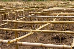 竹子镶板保税的结构 图库摄影