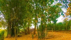 竹子门Greenry树树庭院自然 免版税图库摄影