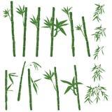 竹子集合白色背景 皇族释放例证