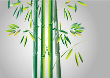 竹子,绿色竹传染媒介例证白色背景 图库摄影