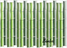 竹子,绿色竹传染媒介例证白色背景 库存图片