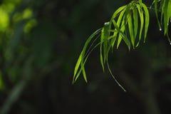 竹子离开背景 免版税图库摄影