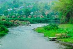 竹子-植物,湖,夏天,水,亚洲 免版税图库摄影