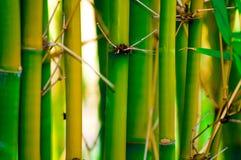 竹子 免版税库存照片
