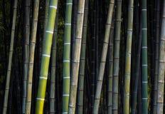 竹密林 免版税图库摄影