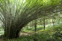 竹工厂 免版税库存照片