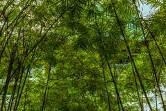 竹庭院在一个寺庙庭院里在新加坡 免版税库存图片