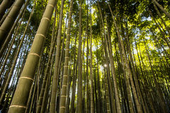 竹庭院在镰仓日本 库存照片