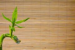 竹新鲜的绿色叶子背景在席子纹理的 Eco背景 库存图片