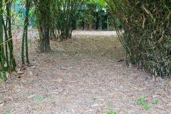 竹方式,植物园 免版税库存照片