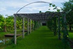 竹曲拱在香蕉庭院里 图库摄影
