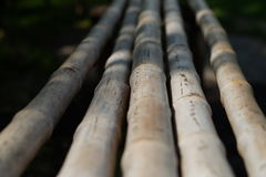竹木头 免版税库存照片