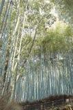竹林木在Arashiyama,日本 库存照片