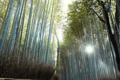 竹林木在Arashiyama,日本 免版税图库摄影