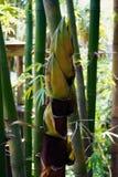 年轻竹树上面 免版税图库摄影
