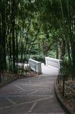 竹树丛和道路在庭院里 免版税库存图片