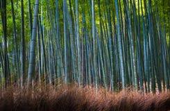 竹树丛在Arashiyama,京都,日本 免版税库存照片