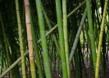 竹树丛的十字形样式在圣地亚哥,加利福尼亚 免版税库存图片