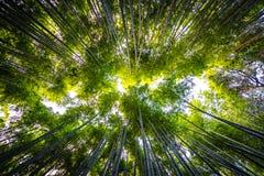 竹树丛美好的风景在Arashiyama的森林里 库存图片