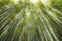 竹树丛高JPG解决方法 库存图片
