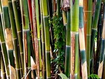 竹树丛高JPG解决方法 图库摄影