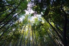 竹树丛, Arashiyama的,京都竹森林 免版税图库摄影