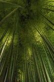 竹树丛, Arashiyama的,京都,日本竹森林 免版税图库摄影