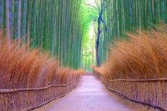 竹树丛 库存图片
