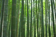竹树丛 库存照片