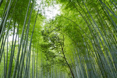竹树背景 免版税库存图片