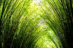 竹树风景在热带雨林的 免版税库存照片