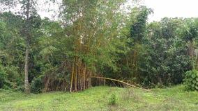 竹树 免版税库存照片