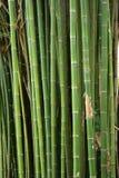 竹树 库存图片