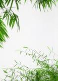 竹框架绿色叶子 免版税库存图片