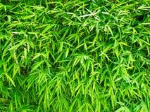 竹框架绿色叶子 免版税图库摄影