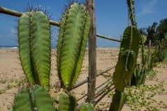 竹棍子和大绿色仙人掌篱芭  温暖的海的岸的环境友好的解决 库存图片