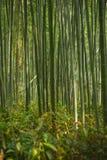 竹森林京都 免版税库存图片