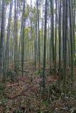 竹森林在京都日本 免版税库存照片