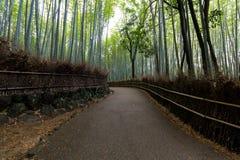 竹森林在京都,日本 免版税库存图片